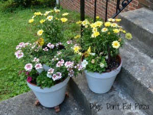 Easy DIY, paint project, planters, curb appeal