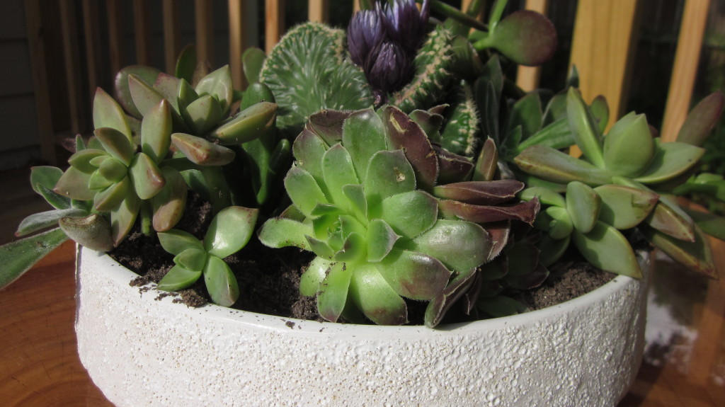 succulent garden weekend project, DIY succulent garden, tips
