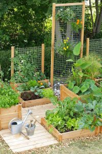 Veggie Garden- Mohawk Home