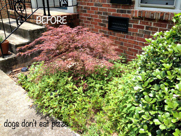 Curb Appeal Tips and Tricks | Karen Cooper | Dogs Don't Eat Pizza | Mohawk Homescapes
