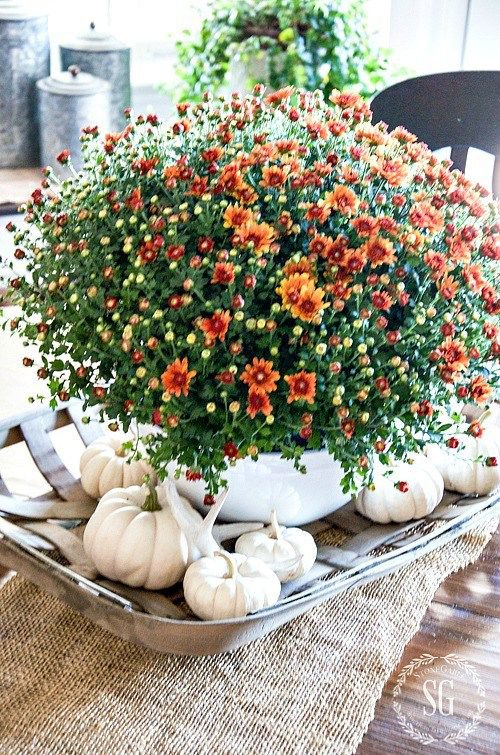 Natural Tablescapes for Fall - Inspiring Fall Tables - Heidi Milton - Mohawk Home - Stone Gable