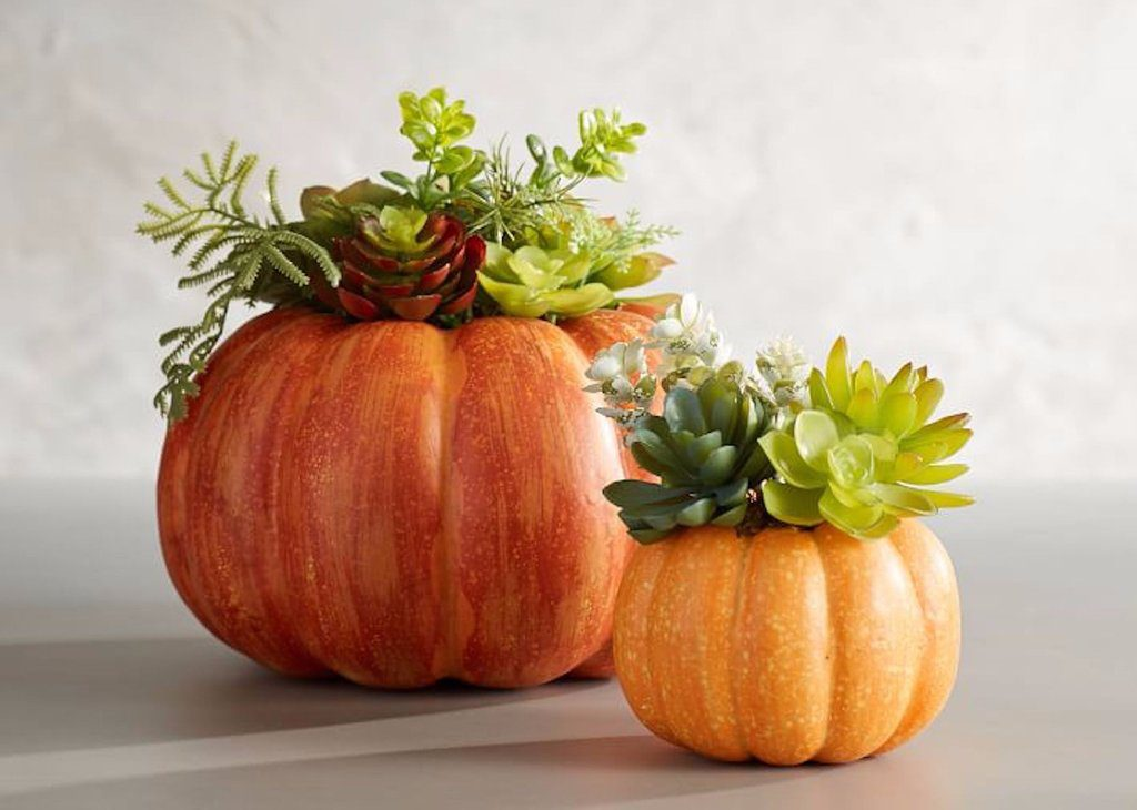 Carve out a place to store your favorite plants and succulents using a plastic pumpkin.