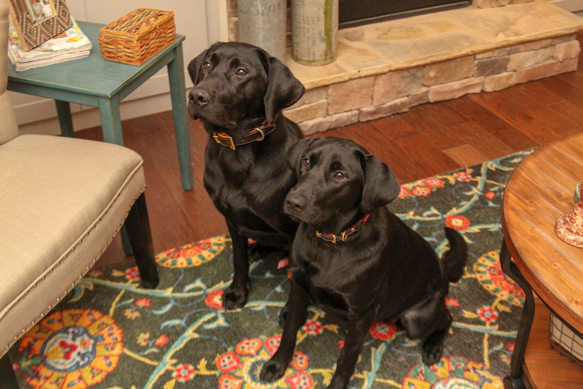 blue pet smartstrand dog rugs p friendly mohawk cashel rectangle rug area runner x