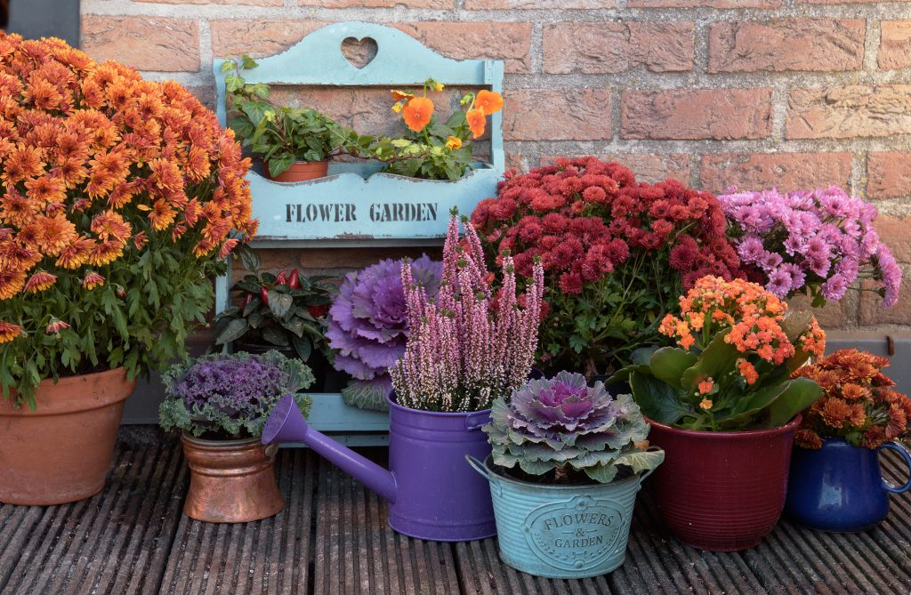 Autumn flowers in wooden boxes for fall front porch decor